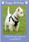 "West Highland White Terrier-Happy Birthday - ""Are You Really THAT Old"" Theme"